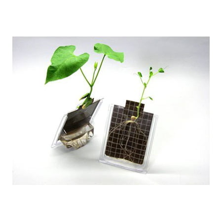Seed Germination Kit, Ages 5-14. By American Educational Products