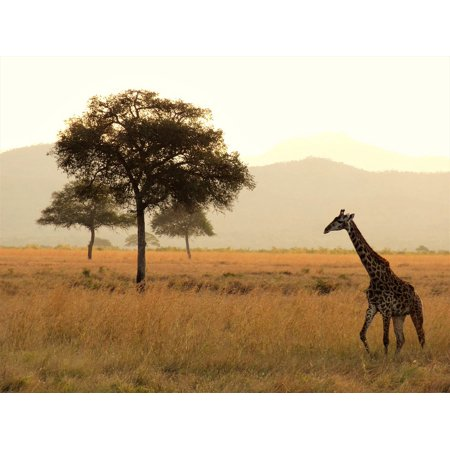 Canvas Print Africa National Park Safari Giraffe Wilderness Stretched Canvas 10 x