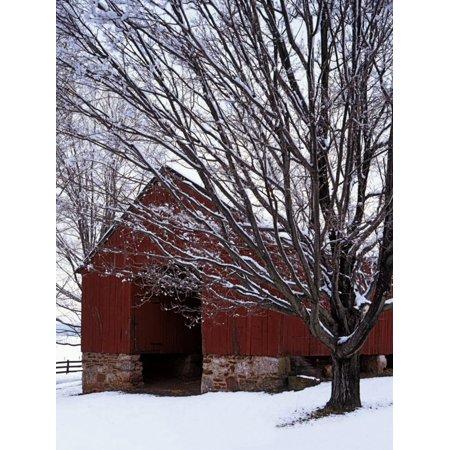Barn and maple after snowfall, Fairfax County, Virginia, USA Print Wall Art By Charles Gurche ()