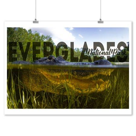 Everglades National Park - Alligator Underwater - Photography (9x12 Art Print, Wall Decor Travel Poster)