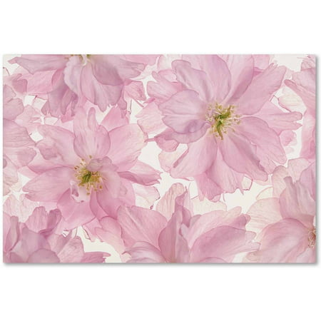 Trademark Fine Art 'Pink Cherry Blossom' Canvas Art by Cora (Pink Cherry Blossoms)
