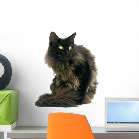 Black Maine Coon Cat Wall Decal by Wallmonkeys Peel and Stick Graphic (18 in H x 15 in W) WM44634