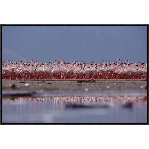 East Urban Home 'Lesser Flamingo Flock Parading' Framed Photographic Print on Canvas