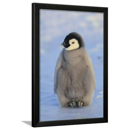 Baby Emperor Penguin Framed Print Wall Art By DLILLC - Walmart.com