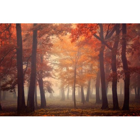 Feel Autumn Misty Forest Fall Tree Landscape Color Photography Print Wall Art By Ildiko