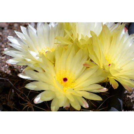 Canvas Print Garden Flowers Flowering Cactus Spring Cactus Stretched