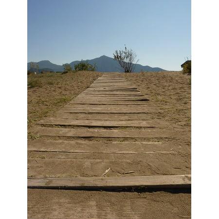- Canvas Print Away Trail Run Desert Web Dry Stretched Canvas 10 x 14