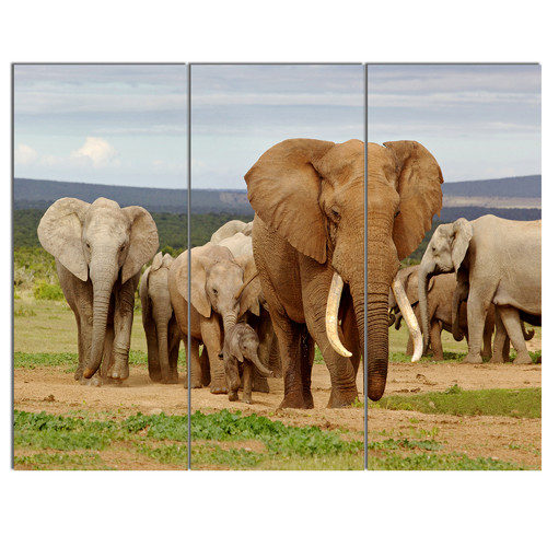 Design Art 'Large Elephant Herd in Africa' 3 Piece Photographic Print on Wrapped Canvas Set