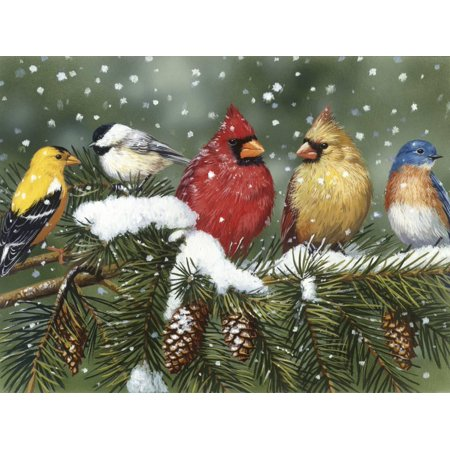 Backyard Birds on Snowy Branch Winter Animal Art Print Wall Art By William Vanderdasson ()