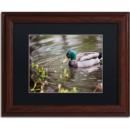 "Trademark Fine Art ""Mallard"" Canvas Art by Jason Shaffer, Black Matte, Wood Frame"