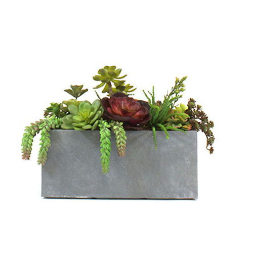 Dalmarko Designs Succulent Garden in Clay Fibre Planter