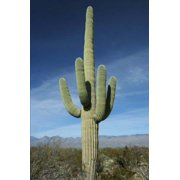 The Saguaro Cactus Journal: 150 Page Lined Notebook/Diary