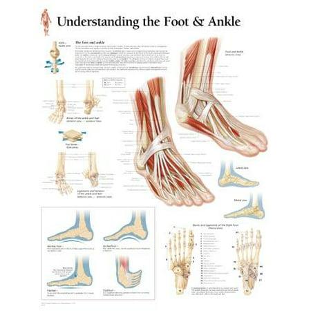 Understanding Foot & Ankle