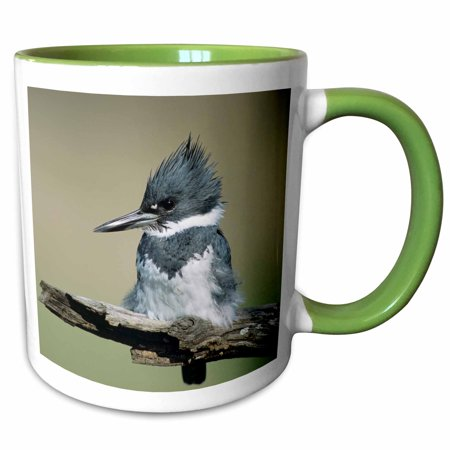 3dRose Belted Kingfisher bird, Rio Grande Valley, Texas - US44 RNU0038 - Rolf Nussbaumer - Two Tone Green Mug, 11-ounce