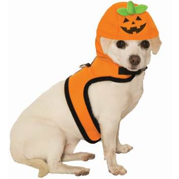 PET COST.-JACK-A-LANTERN-MED (Cute Halloween Quotes Pinterest)