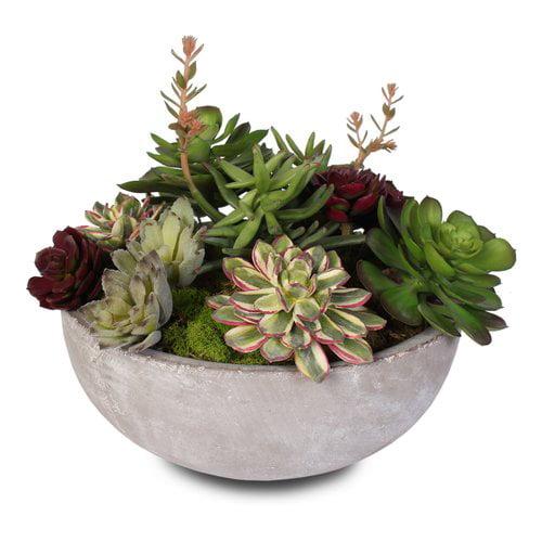 Foundry Select Artificial Desktop Succulent Plant in Pot