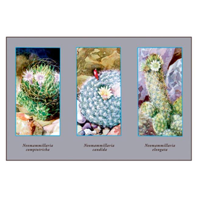 Buy Enlarge 0-587-10282-9P12x18 Neomammillaria Camptotricha- Paper Size P12x18
