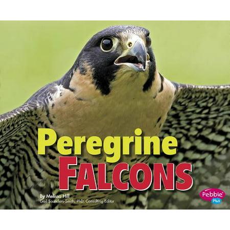 Peregrine Falcons (A Peregrine Falcon Dives At A Pigeon)