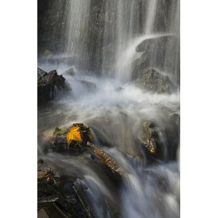 Yellow Salmonberry Leaf Clinging To Rocks In Small Stream With Water Cascading Down From Pillar Mountain Kodiak Island Southwest Alaska Autumn Canvas Art - Marion Owen  Design Pics (11 x 17) (Cascading Leaf)