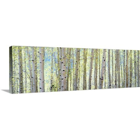 Great Big Canvas Shelley Lake Premium Thick Wrap Canvas Entitled Aspen