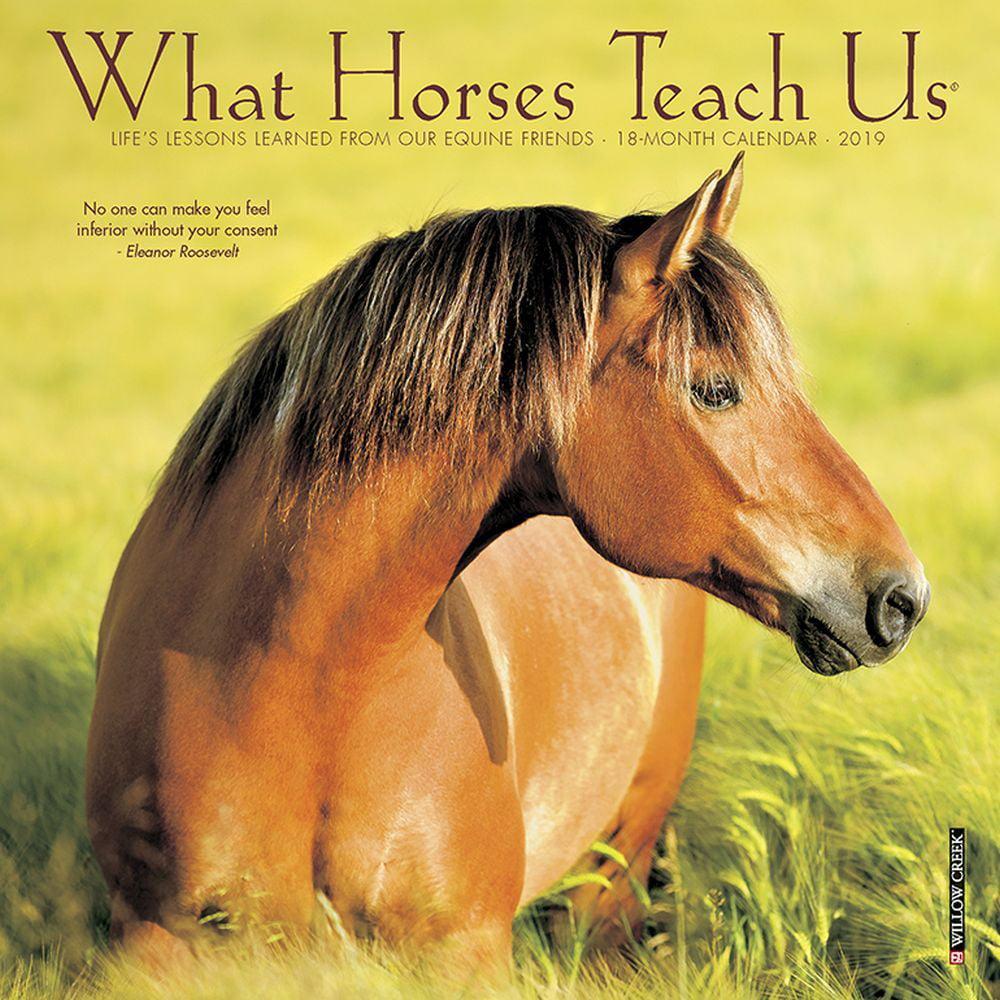 What Horses Teach Us Mini Wall Calendar, Horses by Calendars