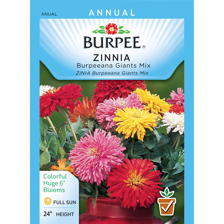 Burpee-Zinnia, Burpeeana Giants Mix Seed Packet - Walmart.com