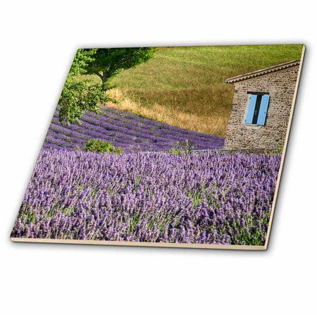 3dRose France, Provence. Lavender fields near a home. - Ceramic Tile, 4-inch