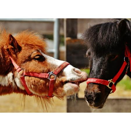 LAMINATED POSTER Play Horses Animal Cute Funny Nature Seahorses Poster Print 24 x 36 - Seahorse Funny