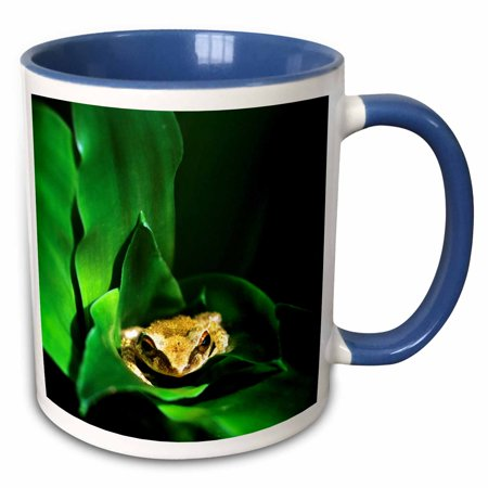 3dRose Coqui Frog in Puerto Rico-CA11 DFR0000 - David R. Frazier - Two Tone Blue Mug, 11-ounce