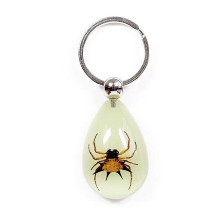 YK601 Real Bug Key Chain-Tear Drop Shape-Glow in the Dark-Spiny Spider (Dropping Spider)