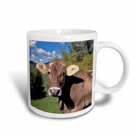 Raffaellesco Italian Ceramic - 3dRose Italy, Dolomite Alps, Swiss Brown cow - EU16 RER0140 - Ric Ergenbright, Ceramic Mug, 11-ounce