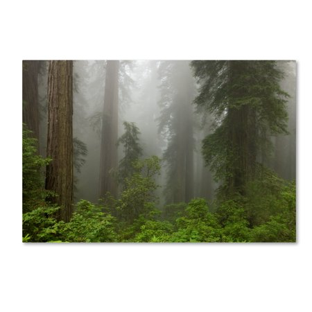 Trademark Fine Art 'Redwoods NP Fog' Canvas Art by Mike Jones (Photo Canvas Cover)