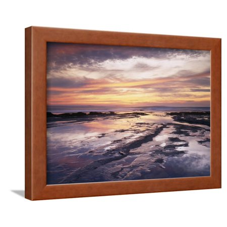 California, San Diego, Sunset Cliffs, Sunset Reflecting in Tide Pools Framed Print Wall Art By Christopher Talbot Frank (Pool Swan)