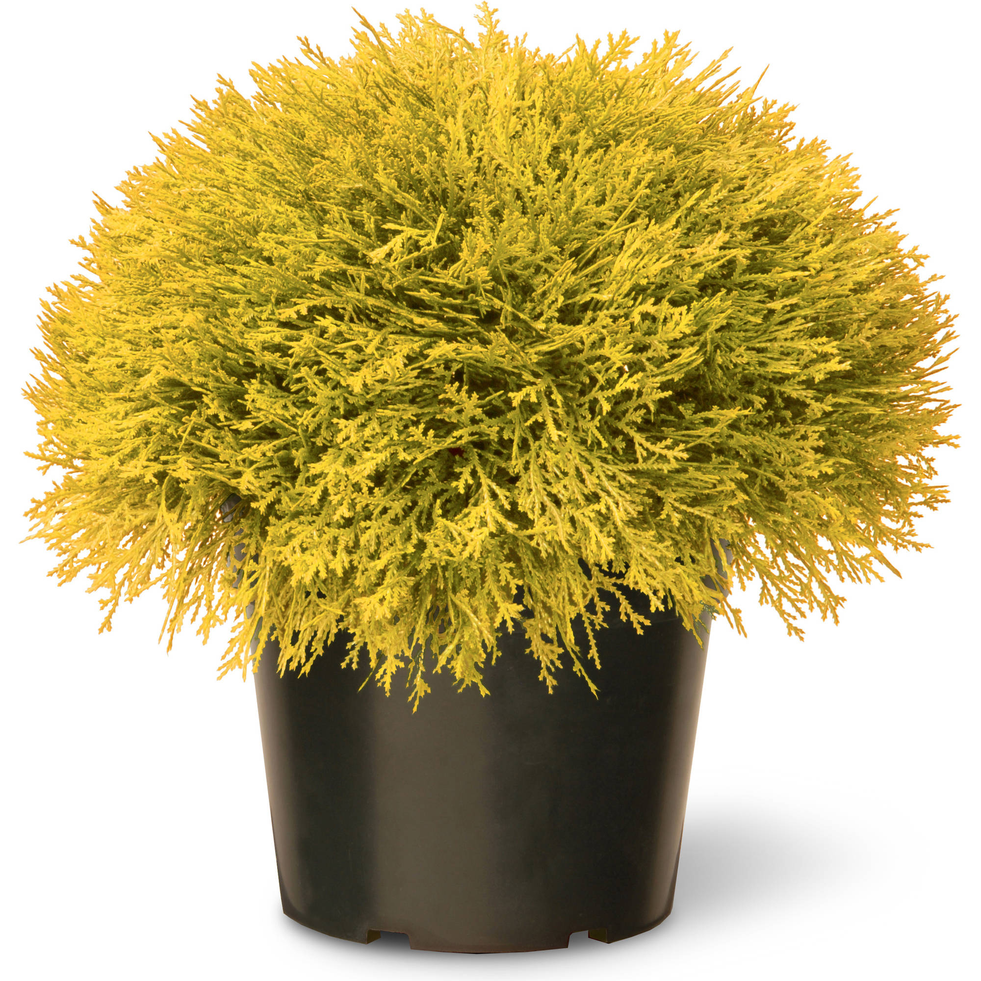 National Tree Golden Juniper Artificial Bush with Green Pot, 15""