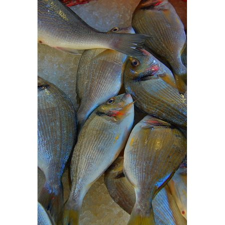 Laminated Poster Sea Fish Sea Tenge Fruits Of Fish Market Fish Poster 24x16 Adhesive Decal - Fruit Of The Sea