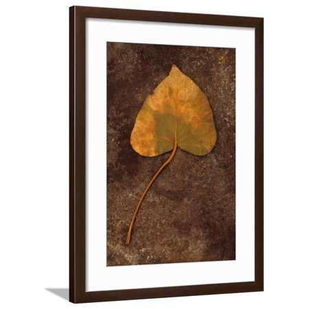 Close Up of Brown Autumn Or Winter Leaf of Ivy Or Hedera Helix Lying On Tarnished Metal Framed Print Wall Art By Den (Autumn Brown Metal)