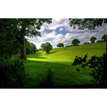 - LAMINATED POSTER Green Scenic Landscape Trees Nature Wood Spring Poster Print 24 x 36
