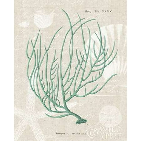 Gorgonia Miniacea on Linen Sea Foam Stretched Canvas - Wild Apple Portfolio (8 x - Canvas Portfolio