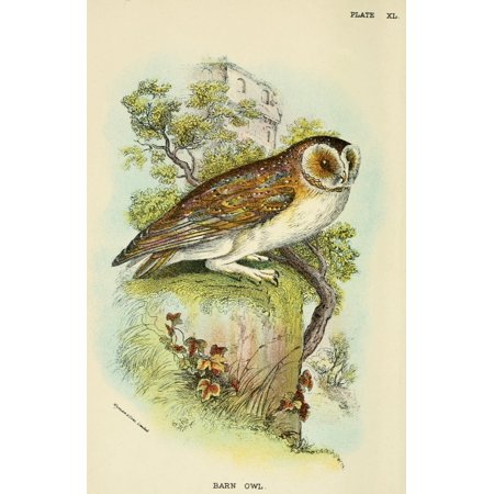 Hand-book to the Birds 1896 Barn Owl Canvas Art - Unknown (18 x 24)