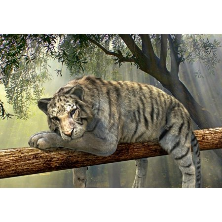 Rainforest Animal Pictures - LAMINATED POSTER Animal World Jungle Tiger Exotic Animal Rainforest Poster Print 24 x 36