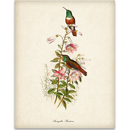 Two Hummingbirds Art Print - 11x14 Unframed Art Print - Great Home Decor and a Great Gift for Bird Watchers ()