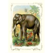 Buy Enlarge 0-587-11194-1P20x30 Elephant- Paper Size P20x30