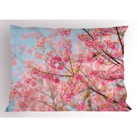 Floral Pillow Sham Japanese Sakura Cherry Blossom Branches Full of Spring Beauty Picture, Decorative Standard Size Printed Pillowcase, 26 X 20 Inches, Pale Pink Baby Blue, by