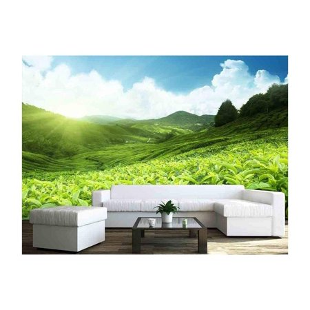 wall26 - Tea Plantation Cameron Highlands, Malaysia - Removable Wall Mural | Self-adhesive Large Wallpaper - 66x96 inches
