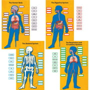 Carson Human Body Bulletin Board Set