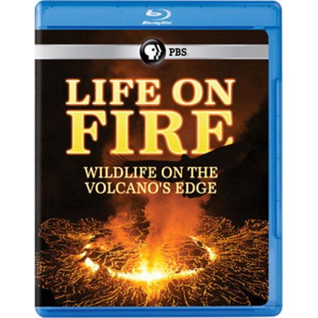 Life on Fire: Wildlife on the Volcano's Edge (Best Way To Start A Fire In The Wild)