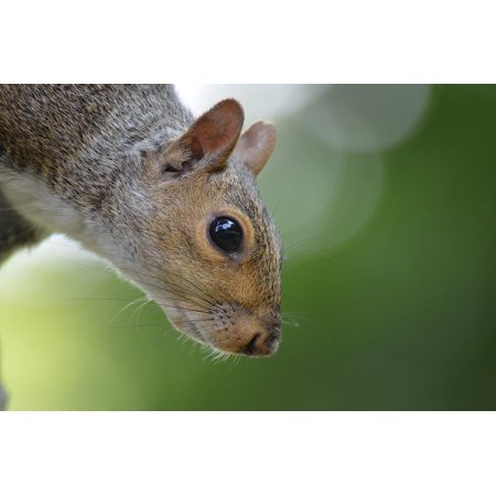 LAMINATED POSTER Tree Animal Central Park New York Squirrel Rodent Poster Print 24 x 36