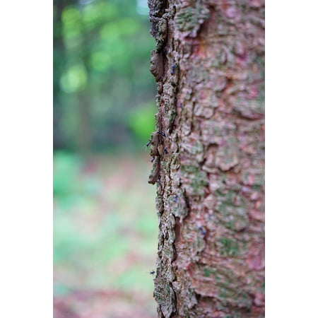 Peel N Stick Poster Of Ants Bark Glossy Black Wood Ant