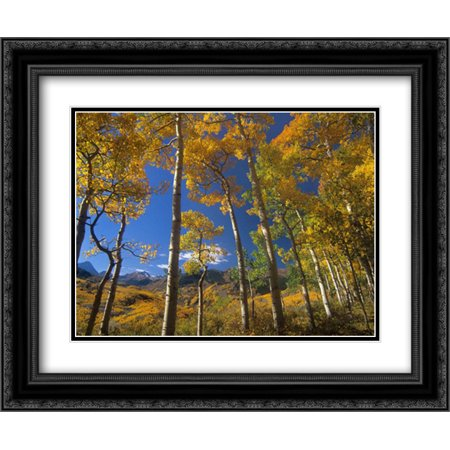 Aspen in fall colors and Maroon Bells, Elk Mountains, Snowmass Wilderness, Colorado 2x Matted 24x20 Black Ornate Framed Art Print by Fitzharris, Tim