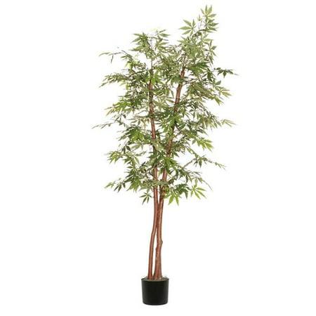 Japanese Maple Deluxe Everyday Tree - 7 ft. (Bonsai Tree Trident Maple)